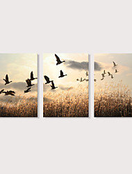 cheap -Print Stretched Canvas Prints - Landscape Photographic Modern Three Panels Art Prints