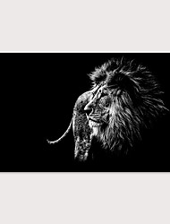cheap -Print Stretched Canvas Prints - Animals Photographic Modern Art Prints