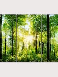 Недорогие -С картинкой Отпечатки на холсте - ботанический Фото Классика Modern 3 панели Репродукции