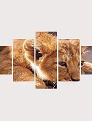 Недорогие -С картинкой Роликовые холсты Отпечатки на холсте - Животные Фото Современный Modern 5 панелей Репродукции