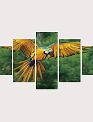 cheap -Print Rolled Canvas Prints Stretched Canvas Prints - Animals Birds Comtemporary Modern Five Panels Art Prints