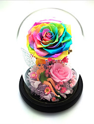 cheap -Non-personalized Other Material Decorations Her Birthday -