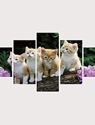 cheap -Print Rolled Canvas Prints Stretched Canvas Prints - Cats Pets Comtemporary Modern Five Panels Art Prints