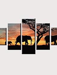 Недорогие -С картинкой Роликовые холсты Отпечатки на холсте - Животные Фото Винтаж Modern 5 панелей Репродукции