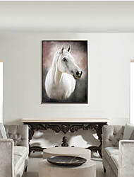cheap -Framed Canvas Framed Oil Painting - Animals Still Life Plastic Oil Painting Wall Art