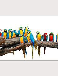 cheap -Print Rolled Canvas Prints - Animals Birds Modern Art Prints