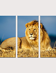 cheap -Print Rolled Canvas Prints - Animals Modern Three Panels Art Prints