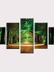 Недорогие -С картинкой Роликовые холсты Отпечатки на холсте - Фото Модерн Классика Modern 5 панелей Репродукции