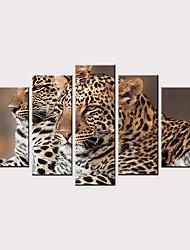 cheap -Print Rolled Canvas Prints - Animals Modern Five Panels Art Prints