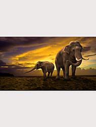 cheap -Print Rolled Canvas Prints - Animals Modern Art Prints