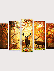 cheap -Print Rolled Canvas Prints - Animals Pop Art Modern Five Panels Art Prints