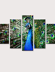 cheap -Print Rolled Canvas Prints - Animals Birds Modern Five Panels Art Prints