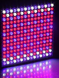 abordables -1 set 30 W 230 lm 225 Perles LED Installation Facile Design nouveau Tricolore Luminaire croissant 85-265 V Maison / Bureau Serre de légumes
