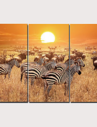 cheap -Print Stretched Canvas Prints - Animals Traditional Modern Three Panels Art Prints