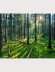 cheap -Print Stretched Canvas Prints - Landscape Traditional Modern Three Panels Art Prints