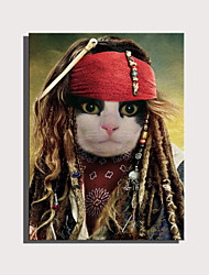 cheap -E-HOME Stretched Canvas Art Cute Animal Series - Pirate Cat Decoration Painting  One Pcs