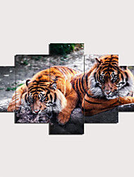 cheap -Print Stretched Canvas Prints - Animals Traditional Modern Five Panels Art Prints