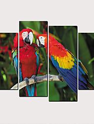 cheap -Print Rolled Canvas Prints - Birds Classic Modern Art Prints