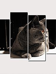 cheap -Print Rolled Canvas Prints - Cats Pets Classic Modern Art Prints