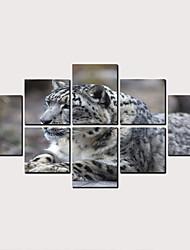cheap -Print Rolled Canvas Prints - Animals Classic Modern Art Prints