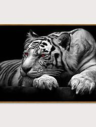 cheap -Framed Art Print Framed Set - Animals Pop Art PS Photo Wall Art