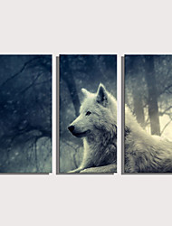 cheap -Print Rolled Canvas Prints Stretched Canvas Prints - Animals Natures & Outdoors Modern Three Panels Art Prints