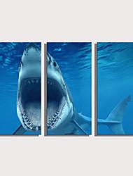 cheap -Print Rolled Canvas Prints Stretched Canvas Prints - Animals Nautical Modern Three Panels Art Prints
