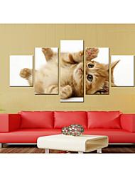 Недорогие -5 штук печать декоративной живописи масляной живописи дома декоративные настенные росписи на холсте, печать животных домашние животные