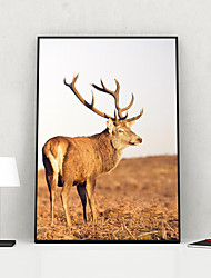 cheap -Framed Art Print Framed Canvas Prints - Animals PS Photo Wall Art