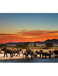 ieftine -imprimeuri panza rulata pe panza - animale still life arta moderna printuri elefanti animale poster pictura tiparita pe panza arta pictura clasica cuadros pentru decorare acasa afise dormitor