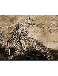 ieftine -imprimeu panza rulata pe panza - animale still life modern art imprimeuri african leopard panza pictură modern neframed print și afișe imagini decorative art wall cuadros living