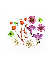 cheap -1 pcs Removable / Creative Dried Flower Decals For Finger Nail Creative Flower nail art Manicure Pedicure Daily Fashion