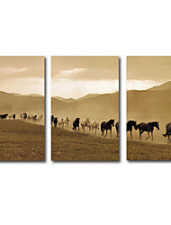 cheap -3 Panels Wall Art Canvas Prints Painting Artwork Picture HD Landscape Horse Animal Desert Home Decoration Dcor Stretched Frame Ready to Hang
