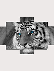 cheap -5 Panels Wall Art Canvas Prints Painting Artwork Picture Tiger Animal Home Decoration Décor Rolled Canvas No Frame Unframed Unstretched