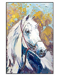 cheap -Oil Painting Handmade Hand Painted Wall Art Modern White Horse Animal Home Decoration Decor Rolled Canvas No Frame Unstretched