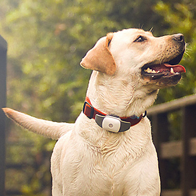 preiswerte Bekleidung & Accessoires für Hunde-Gesundheitspflege Hundekleidung Wasserdicht Weiß Gelb Grün Kostüm Silikon Kunststoff