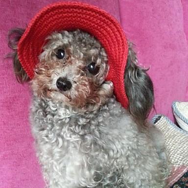 Katt Hund Huvtröjor Snusnäsdukar och mössor Hundkläder Svart Purpur Orange Kostym Nylon Enfärgad Semester S M