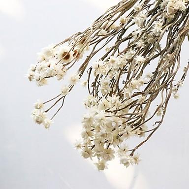 Ψεύτικα λουλούδια 1 Κλαδί Κλασσικό Μοντέρνα Αιώνια Λουλούδια Λουλούδι για Τραπέζι