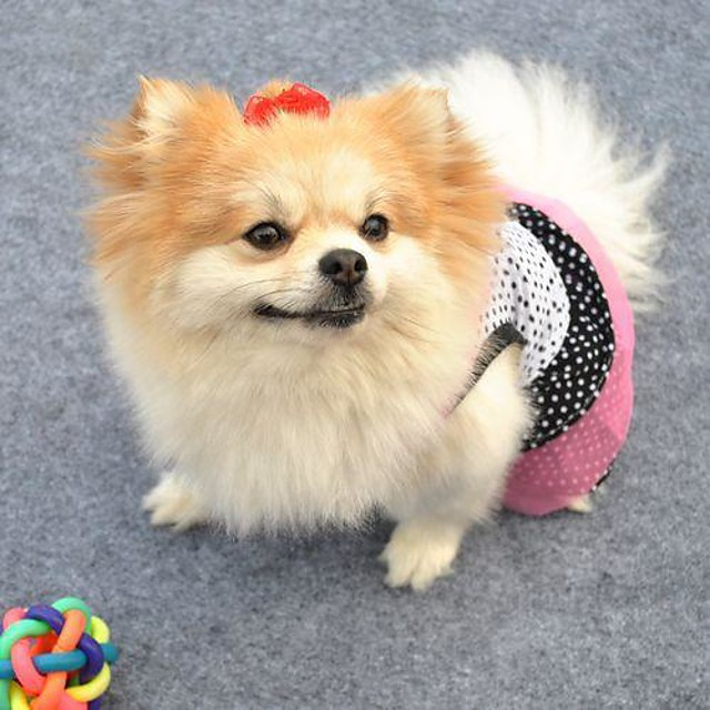 Cat Dog Dress Polka Dot Cosplay Wedding Dog Clothes White Black Costume Baby Small Dog Cotton XS S M L