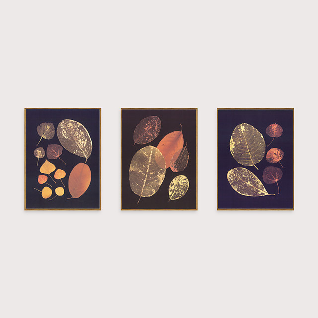 Framed Art Print Framed Set - Abstract Botanical PS Illustration Wall Art