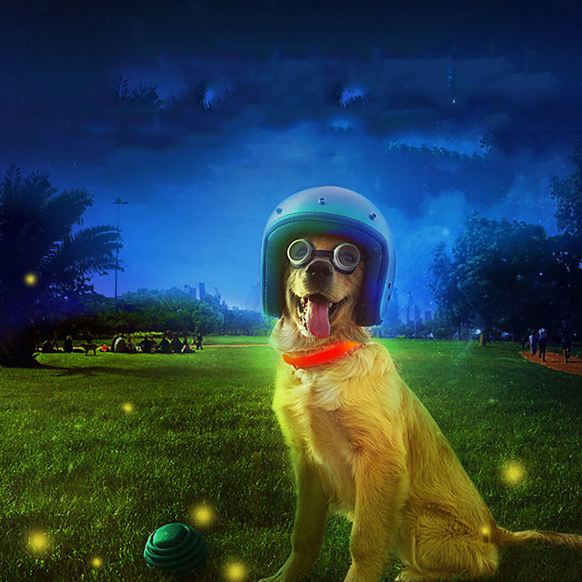 Dog Cat Collar Light Up Collar LED Lights Flashing Anti Lost Other Polyester Rainbow White