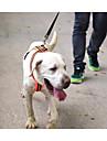 Hund Selar Reflekterande Andningsfunktion Justerbara / Infällbar Enfärgad Nylon Orange Grön Husky Labrador golden retriever Pudel