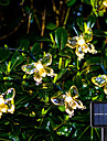 Outdoor Solar LED String Light 6.5m 30LEDs Outdoor Waterpoof Butterfly Warm White Colorful White 8 Mode Outdoor Waterproof Fairy Light Wedding Patio Garden House Holiday Decoration Lamp Garden Light