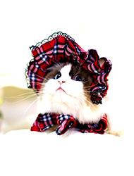 Cat Clothes & Shoes