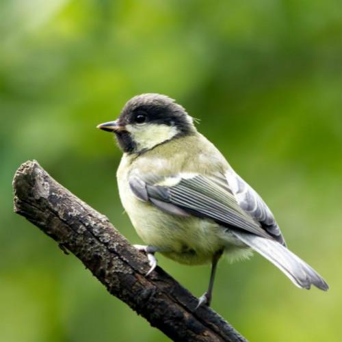 إكسسوارات الطيور