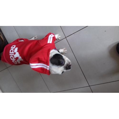 ... Kočka   Pes mikiny   Kombinéza Oblečení pro psy dopis a číslo Modrá    Růžová   fd9f412aed