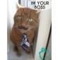 Katt Hund Knyta/Fluga Hundkläder Bröllop Kostym För husdjur