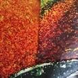 bella foresta naturale stampata grande arazzo a parete hippy economico appeso a parete bohemien arazzi arazzi mandala wall art decor